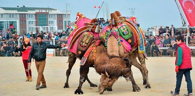 Krizdeki Horoz'a 'deve' desteği