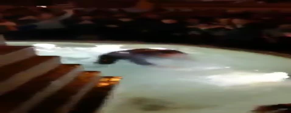 Roma başkanını havuza attılar!